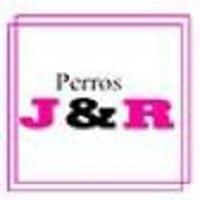 Perros J&R Colina